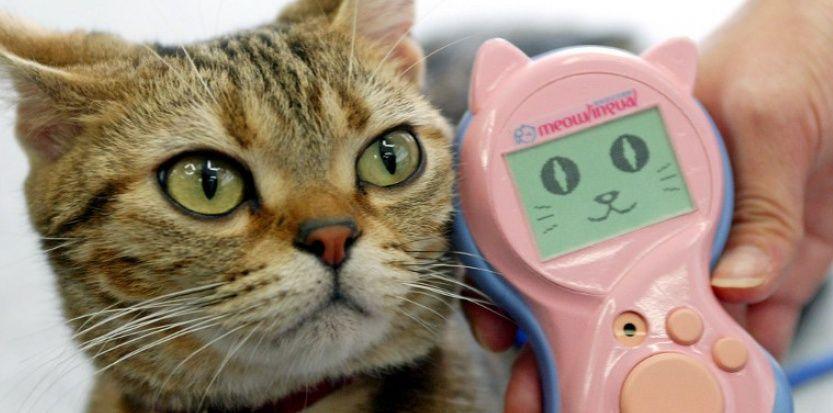 traduttore gatto