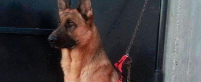Akil, il cane poliziotto ucciso dai terroristi 'morto da eroe'
