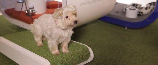Dream Doghouse, la cuccia smart per cani della Samsung