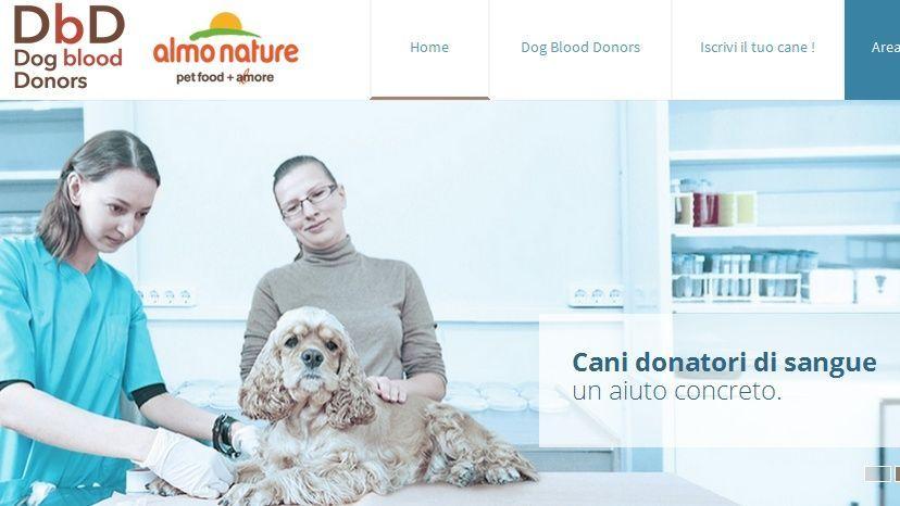 Dog Blood Donors, la prima banca dati per cani donatori di sangue