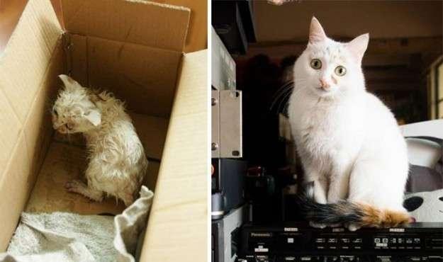Gatti salvati e curati: le foto prima e dopo il ritrovamento