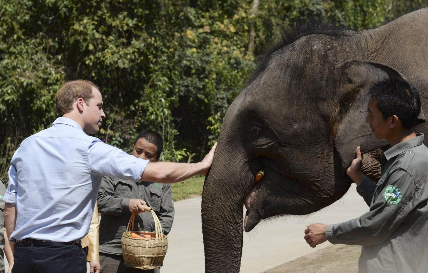 Principe William: la gaffe sugli elefanti in Cina