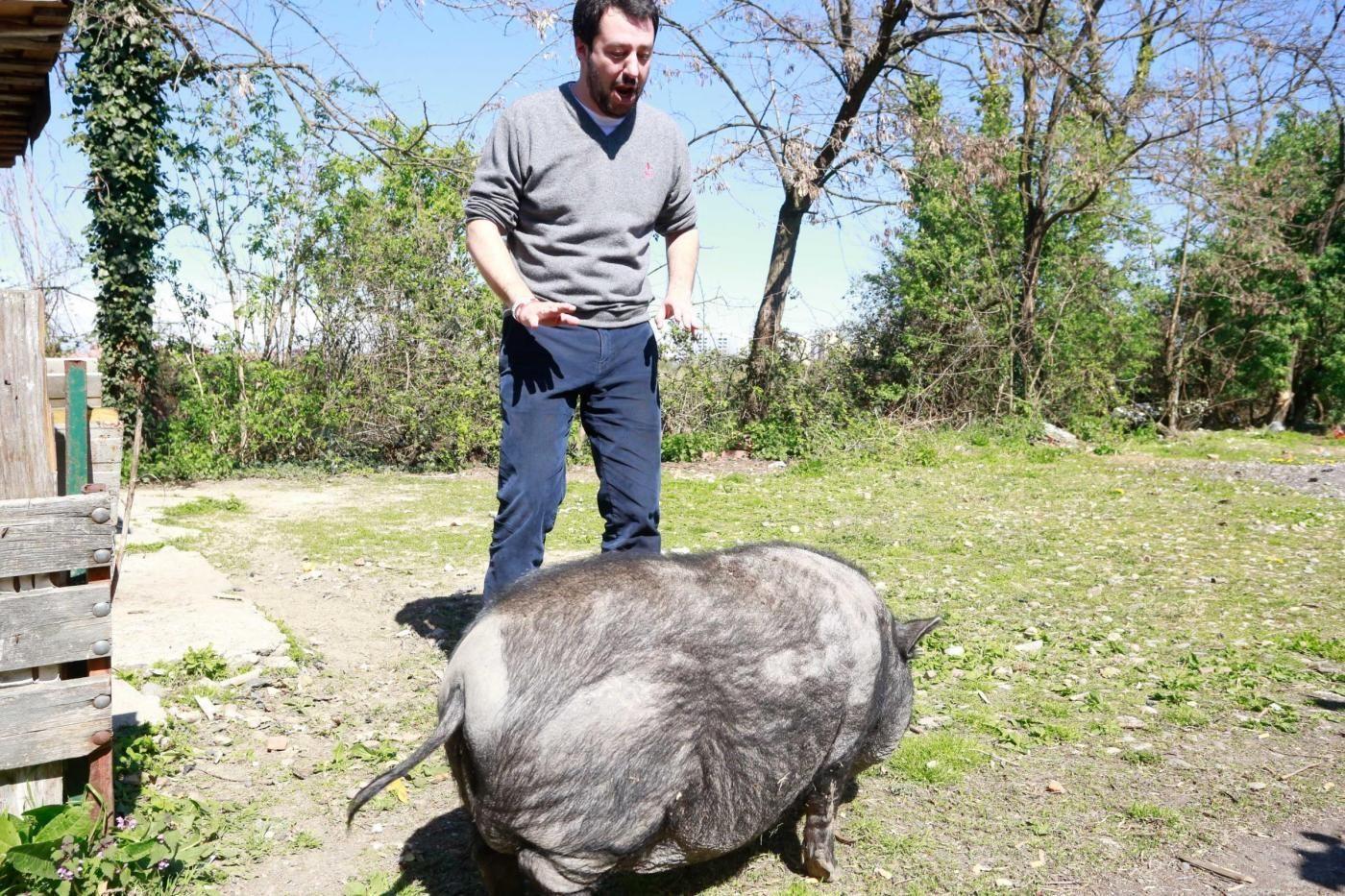 Matteo Salvini incontra un maiale al campo Rom di via Chiesa Rossa a Milano