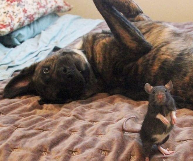 Riff e Osiris, topo e cane amici per la pelle