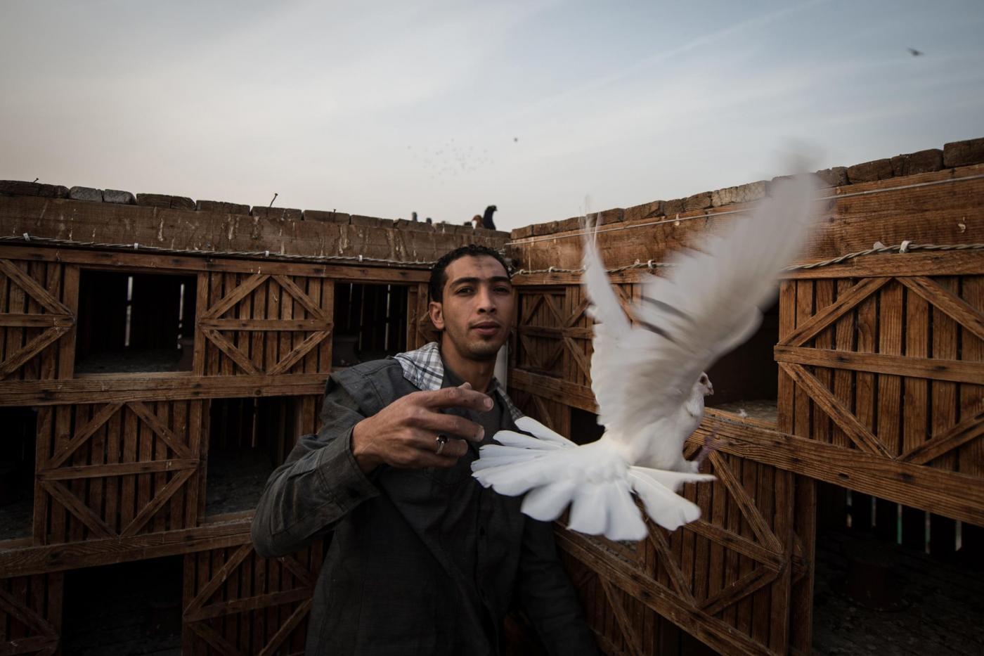 """Isis in guerra coi piccioni: """"Il loro volo offende l'islam"""""""