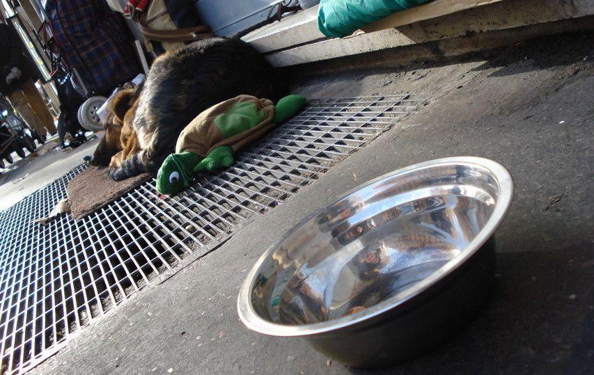 Offre la colazione a una mendicante, non poteva immaginare cosa sarebbe accaduto