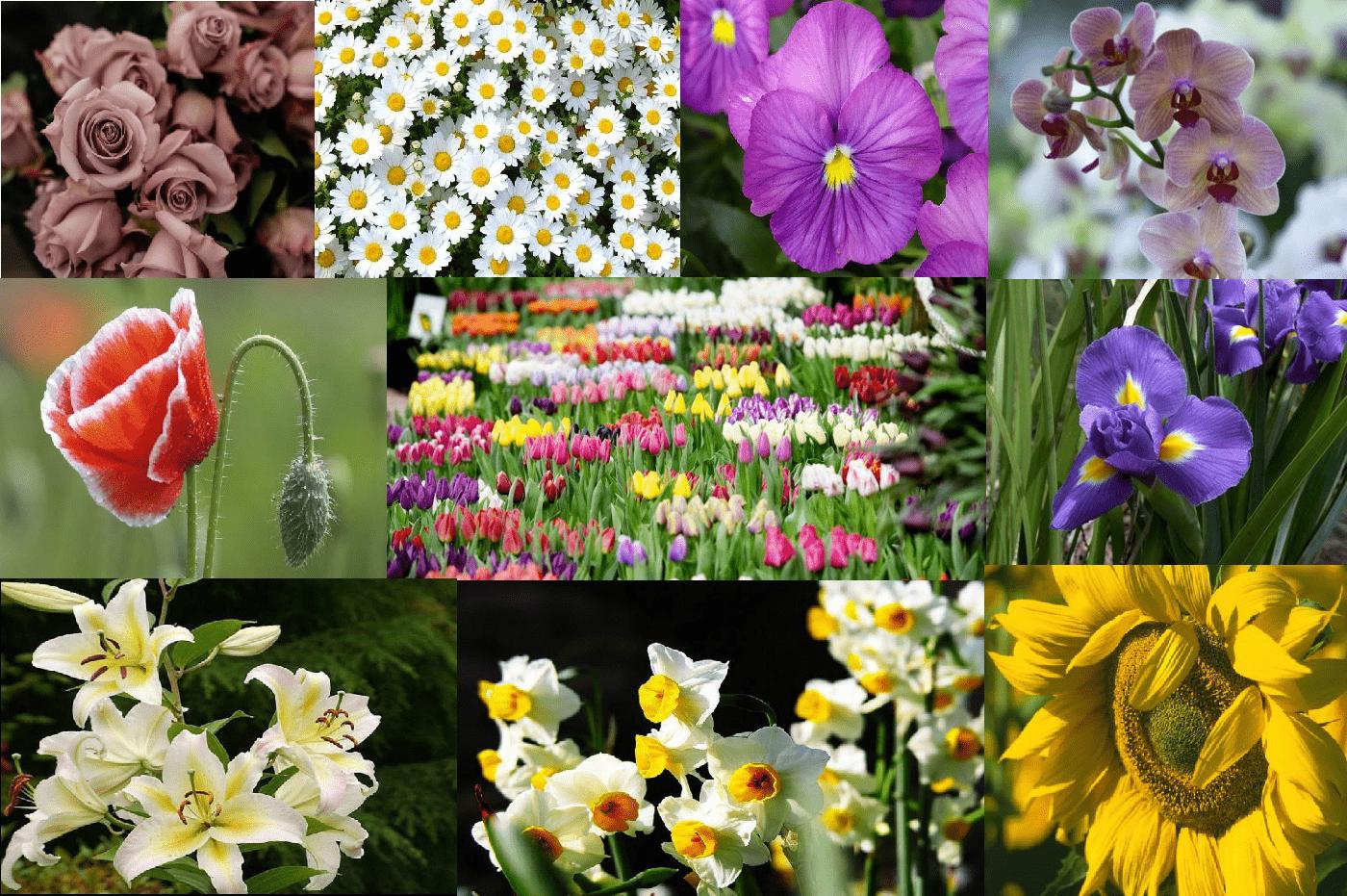 scegli un fiore personalita