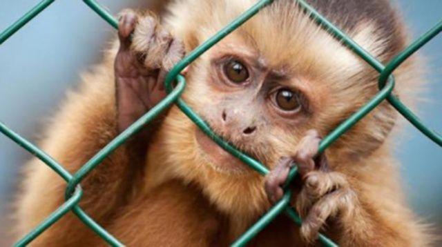 Stop Vivisection bocciata: Commissione Europea si schiera con la ricerca