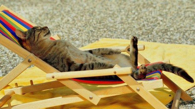 Cani e gatti in vacanza: tutto quello che c'è da sapere