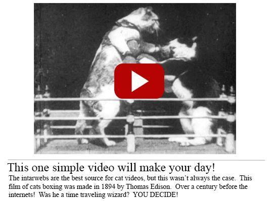 Video gattini 1894 150x150