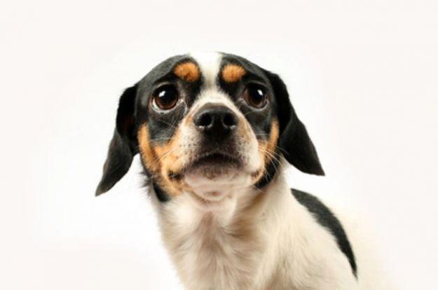 Abbandono dei cani in estate: statistiche, guide per contrastarlo e info utili
