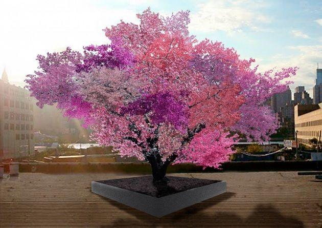 albero 40 tipi frutta