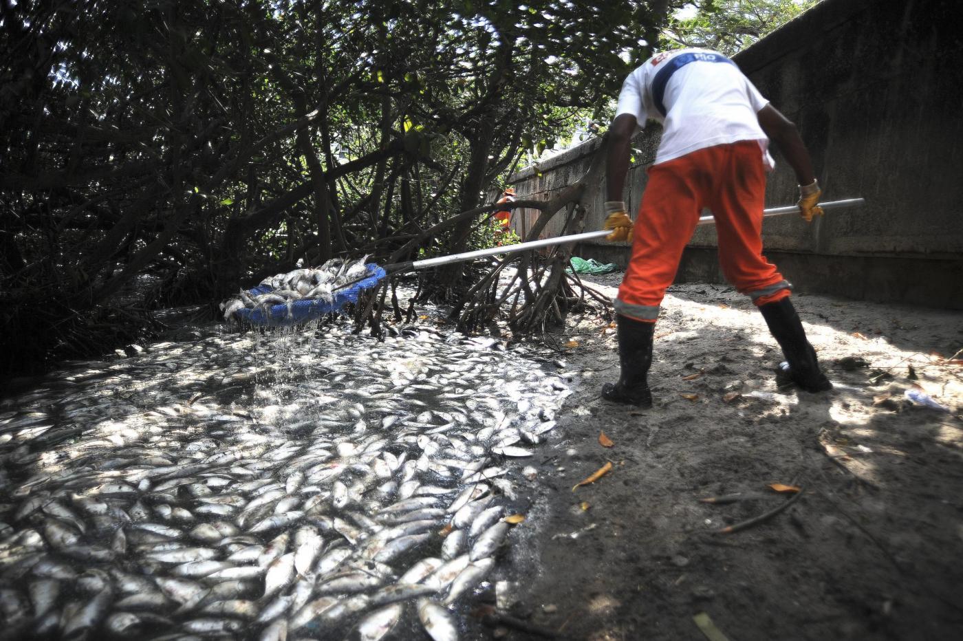 Pesci a rischio estinzione: colpa dei cambiamenti climatici