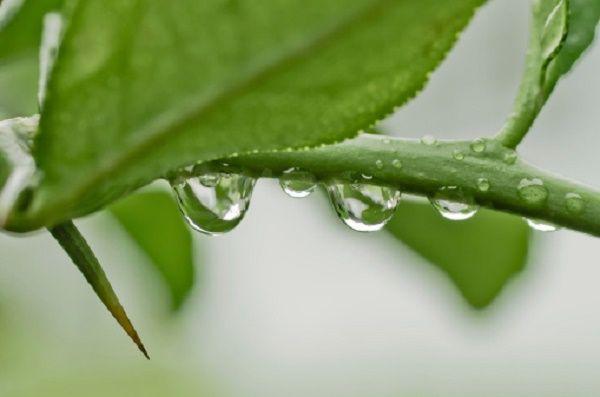 Come proteggere le piante dal caldo: 5 consigli utili