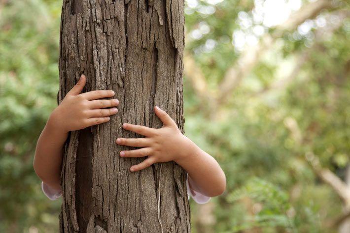 La terapia degli alberi: cos'è, come funziona e dove la praticano