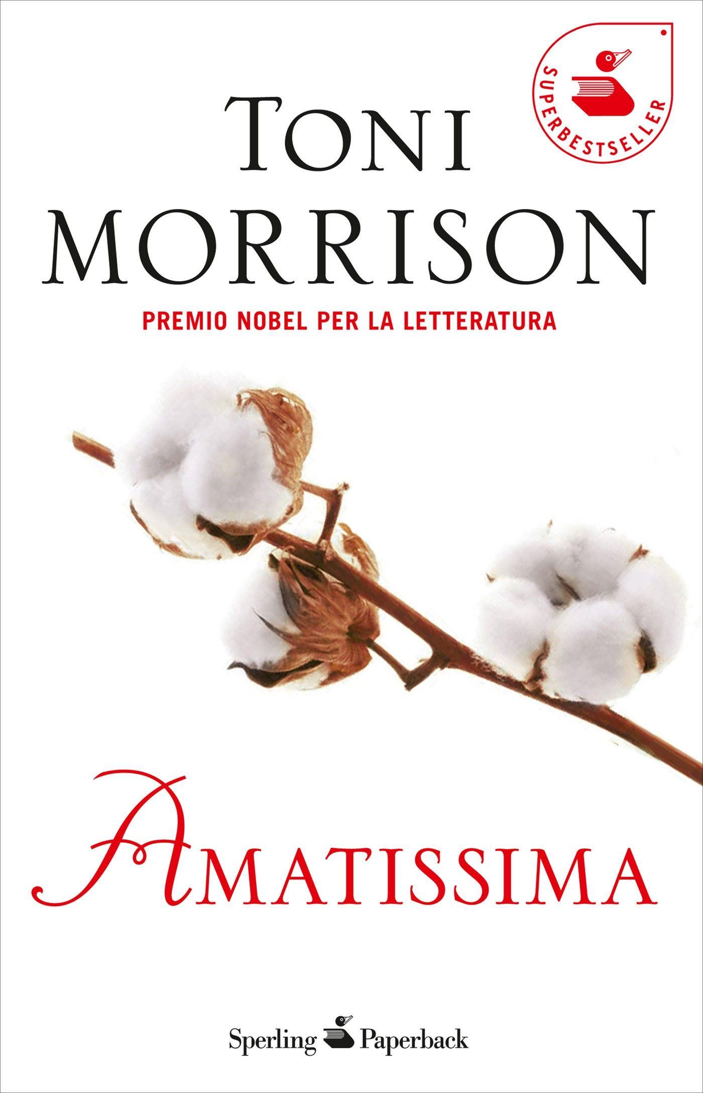 amatissima cover