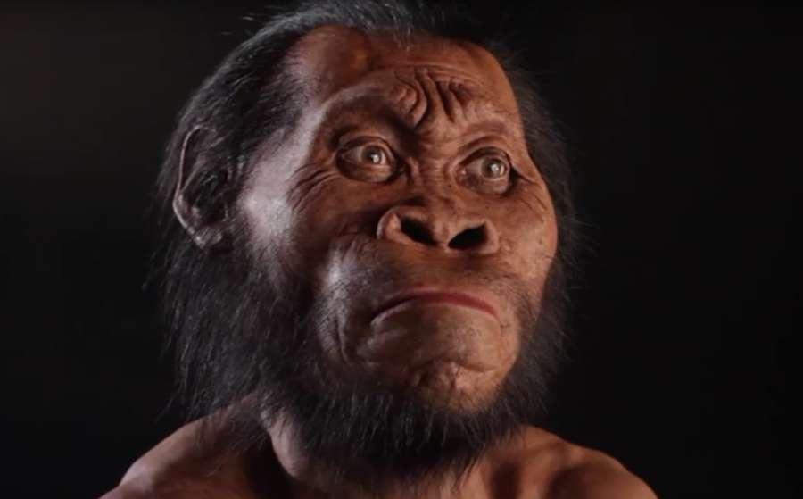 Homo Naledi: scoperta in Sudafrica una nuova specie umana