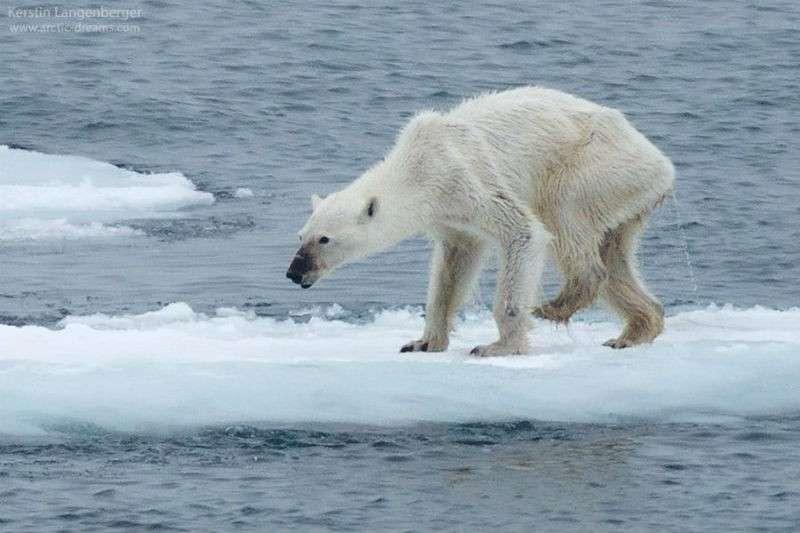 Cambiamenti climatici: le foto che non lasciano scampo
