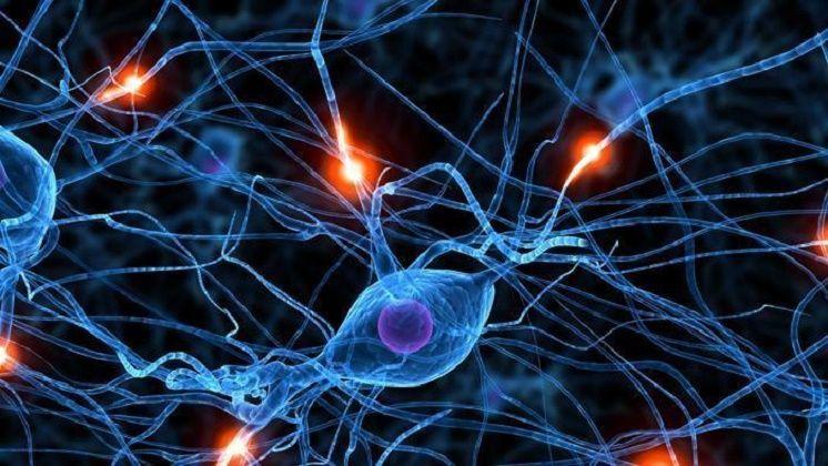 Sla, sclerosi multipla ed epilessia: scoperto l'enzima per la cura