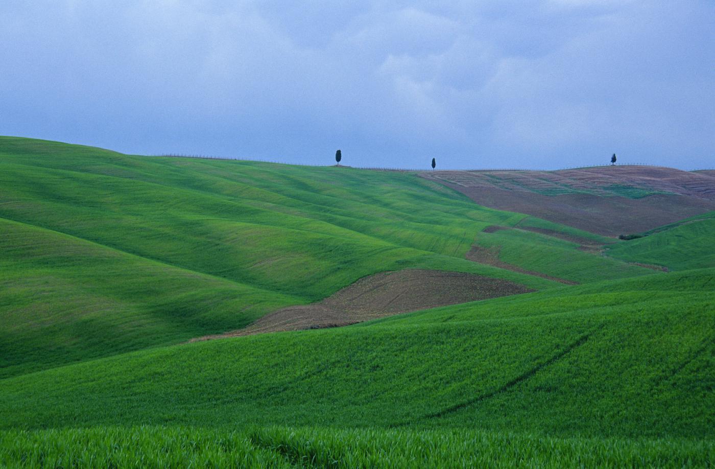 vacnze green Colli toscani
