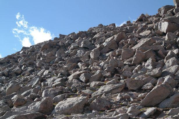 Dove si nasconde la pecora delle montagne rocciose?