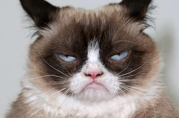 Gatti più strani del mondo: quelli più assurdi