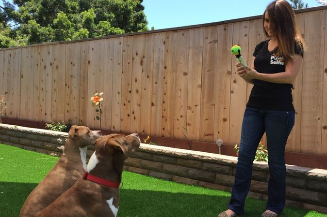 Selfie con cane: una pallina da tennis per fare la foto perfetta