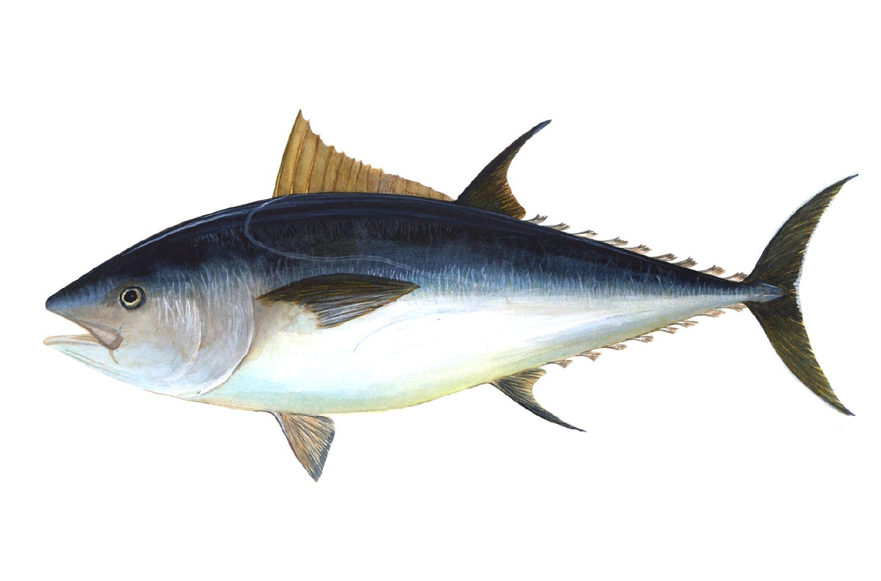 tonno rosso estinzione