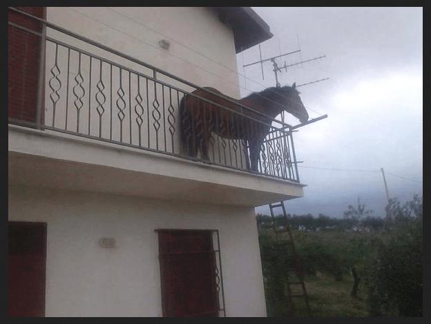 Che ci fa un cavallo sul balcone ad Agrigento?