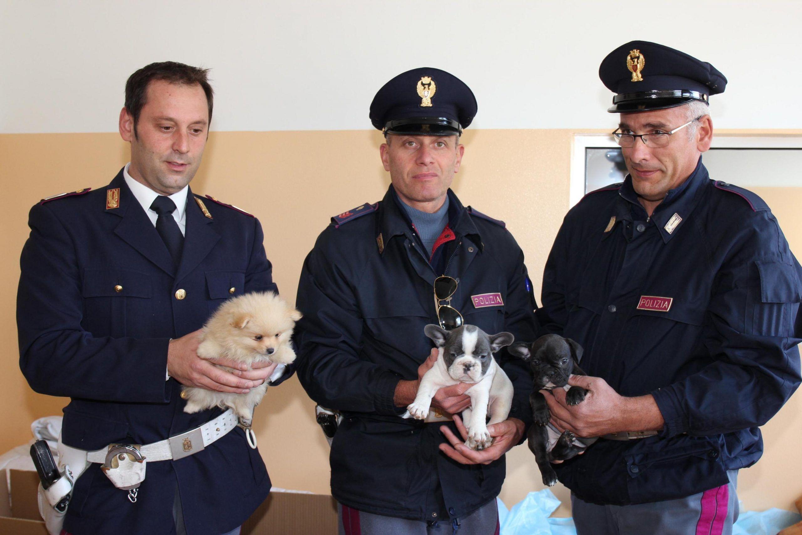 Polstrada scopre 49 cuccioli cane in auto Slovacchia