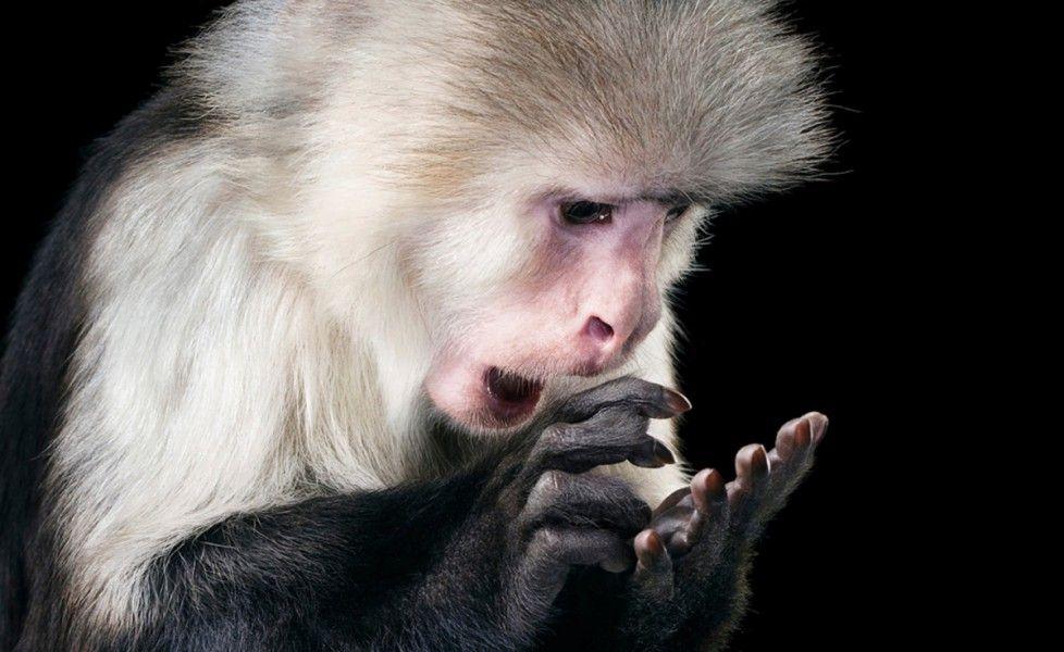 animali comportamenti umani