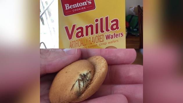 ragno nel biscotto