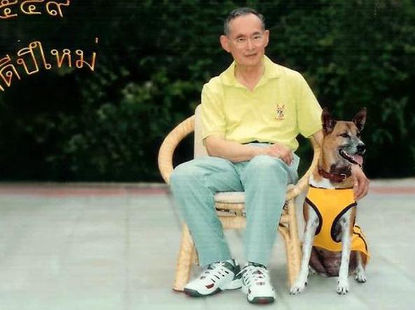 Thailandia, uomo insulta il cane del re: ora rischia 37 anni di carcere