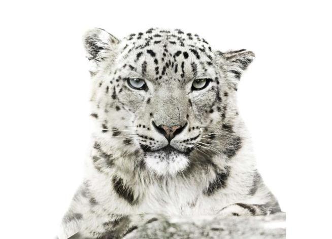 Calendari 2016 per l'ambiente: dal WWF a Greenpeace