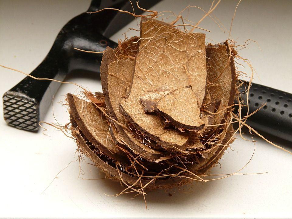 fibra di cocco