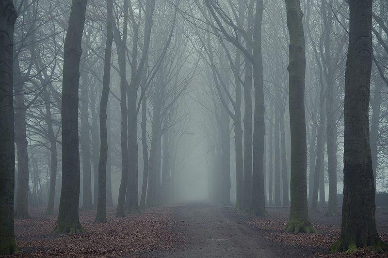 la ragazza nella nebbia, carrisi