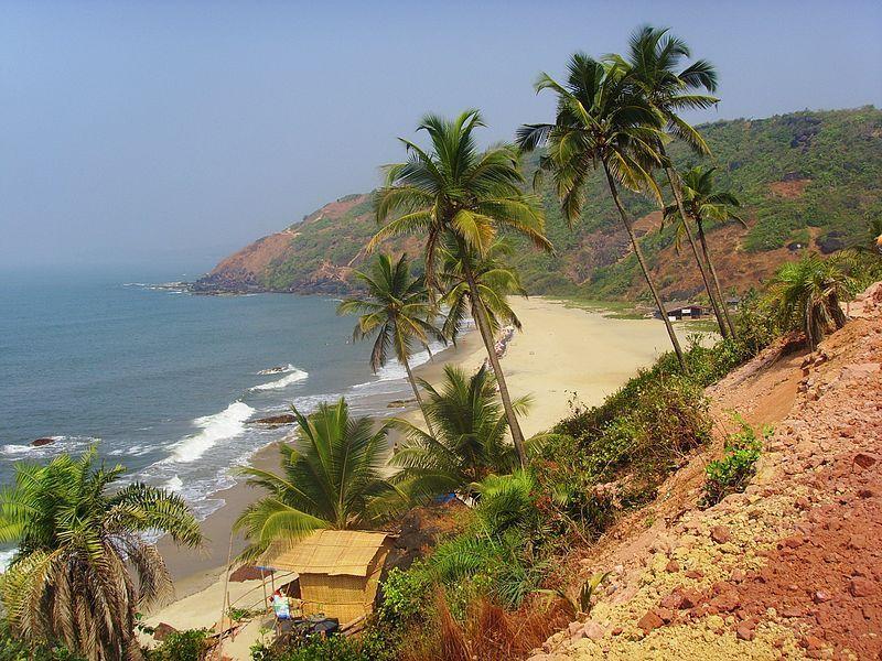 India, palma da cocco a Goa perde tutela giuridica: aumenta il rischio deforestazione