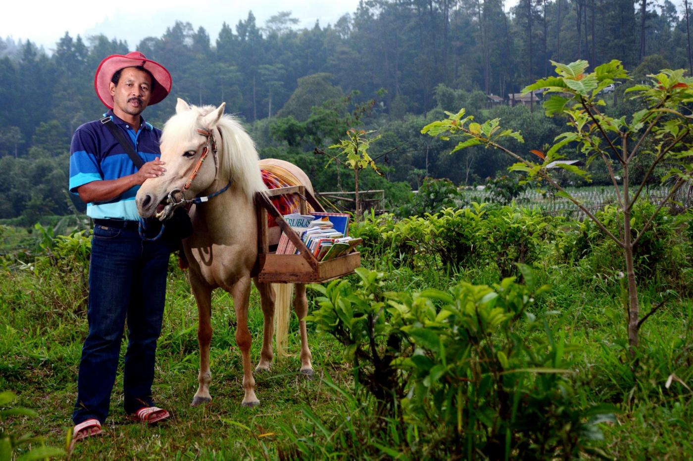 INDONESIA biblioteca mobile su cavallo