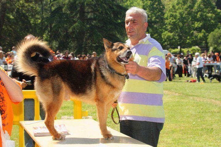 Cane rapito dai rom torna a casa dopo 3 anni