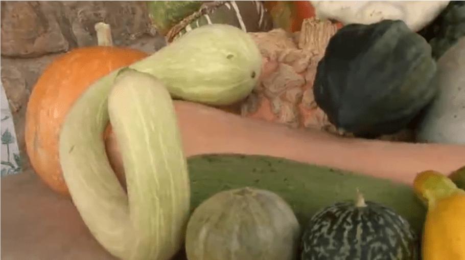 Varieta di zucchine
