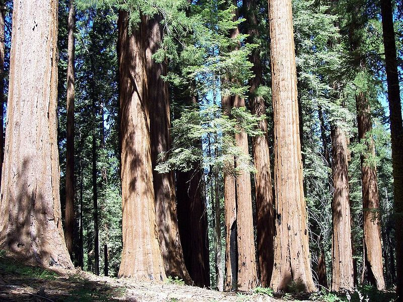 foresta california