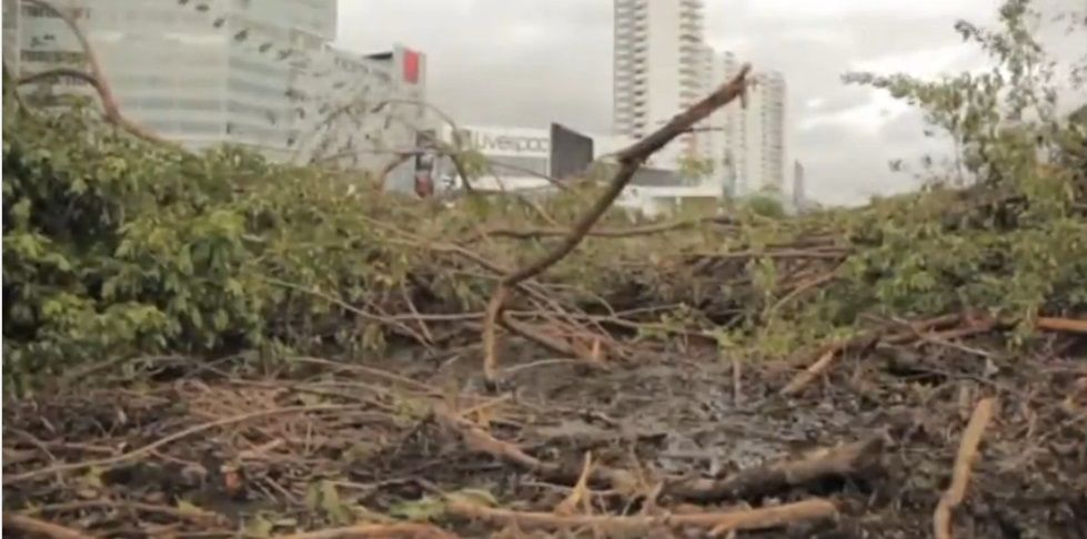Mangrovie in Messico: la distruzione delle piante in nome del turismo