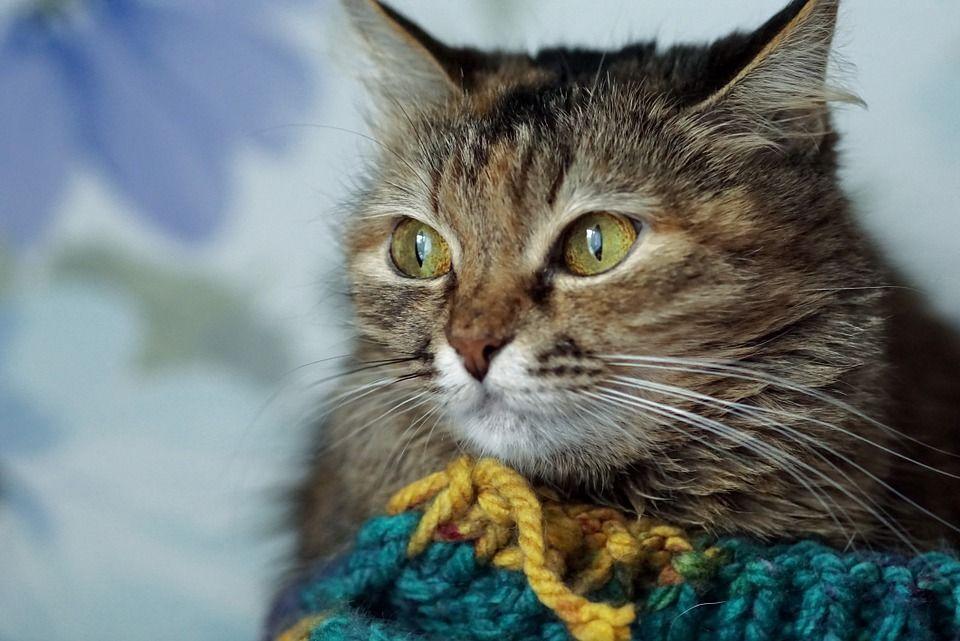 Giornata mondiale del gatto: storia di un animale tanto amato, quanto 'cucinato'