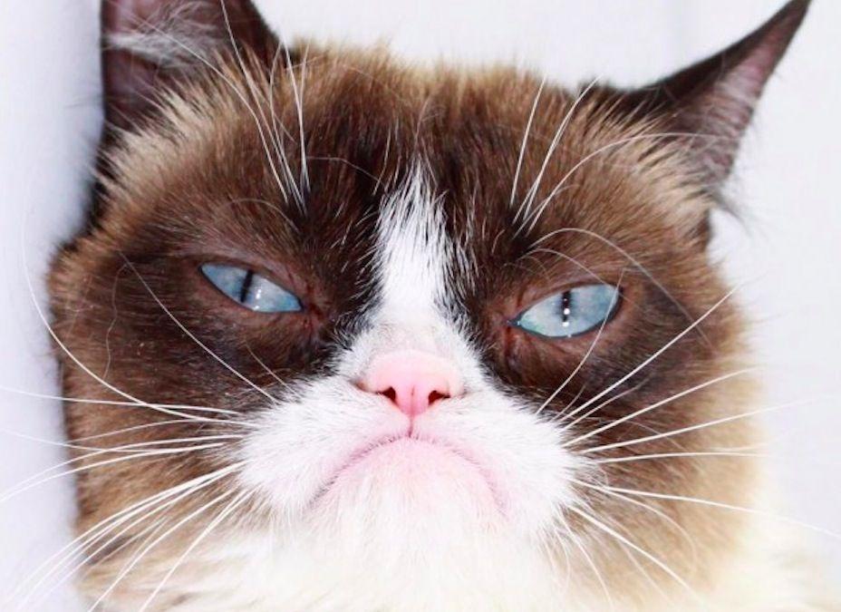 Grumpy Cat a Los Angeles