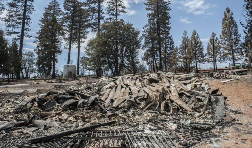 antropocene deforestazione