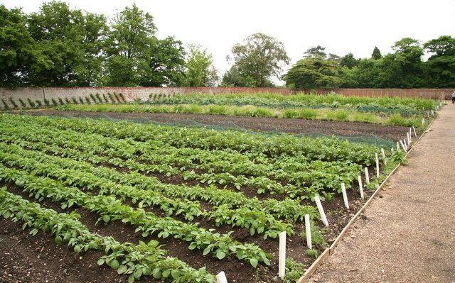 fertilizzanti orto