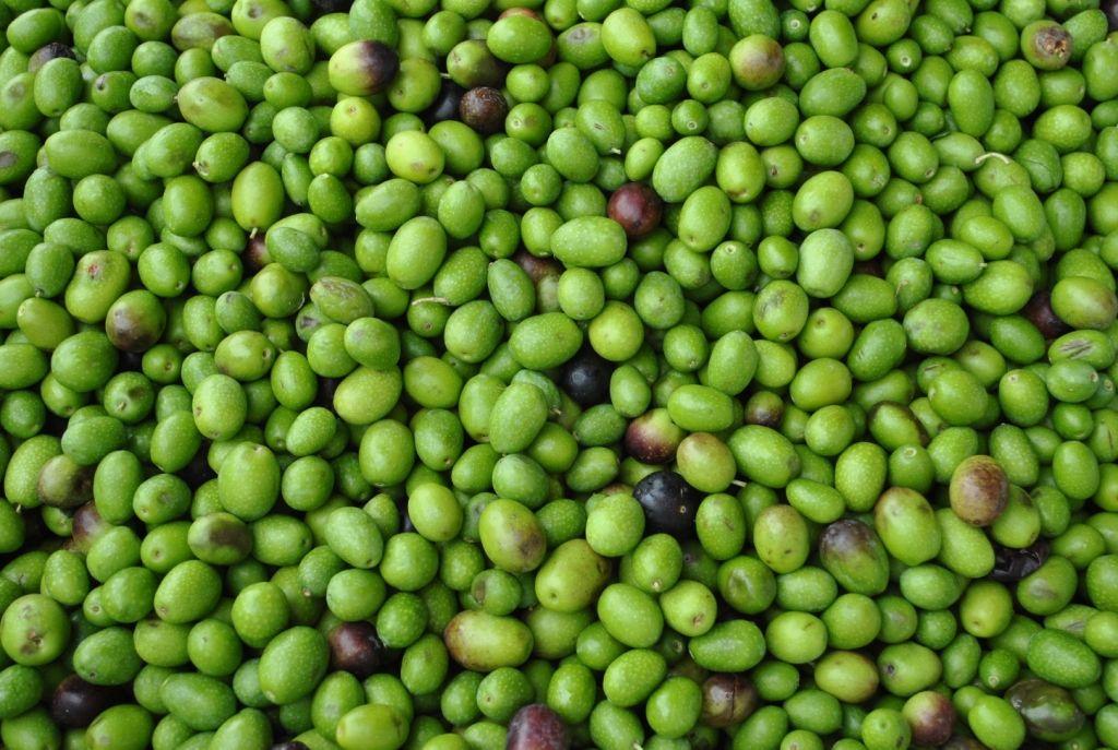 Olive verdi colorate con sostanze tossiche, maxisequestro e denunce anche a Latina