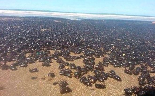 Scarafaggi invadono le spiagge argentine: «E' la fine del mondo»