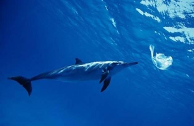 delfino plastica