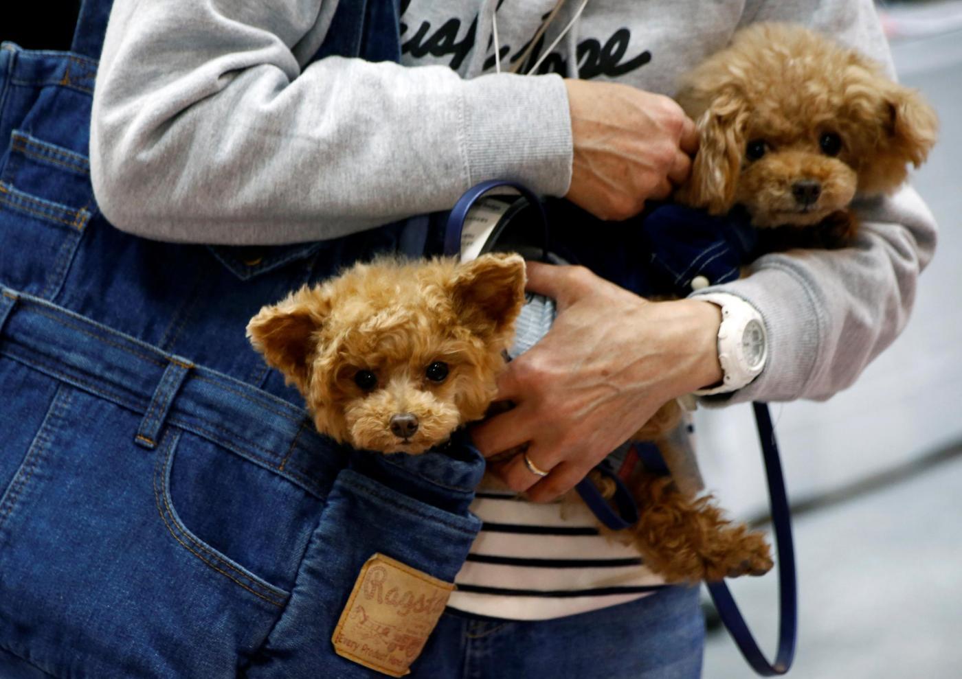 Modello 730, detrazione spese veterinarie per animali domestici